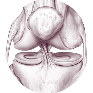 Knee-anatomy-5702222